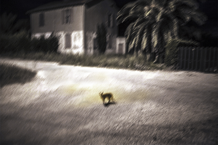chat dans la nuit salin de giraud photo couleur de Guy Monnet de la série Murmure de lumière