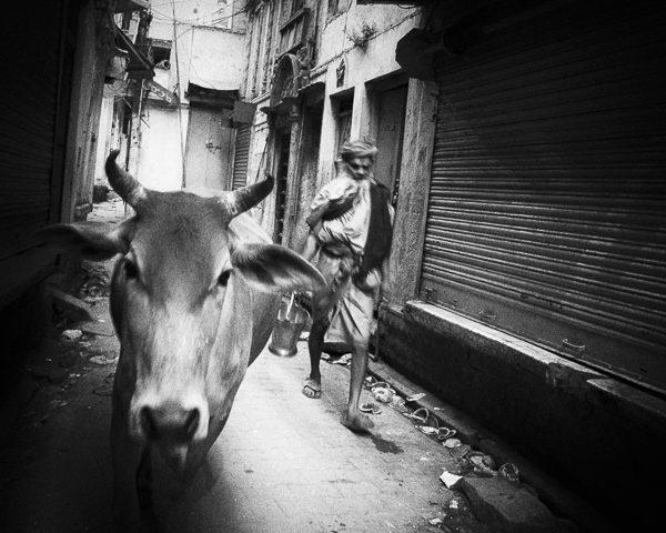 une vache et un homme dans la rue photo contraste technique grain argentique de Guy Monnet noir et blanc de la série Tamil Nadu Tiruvannamalai Inde